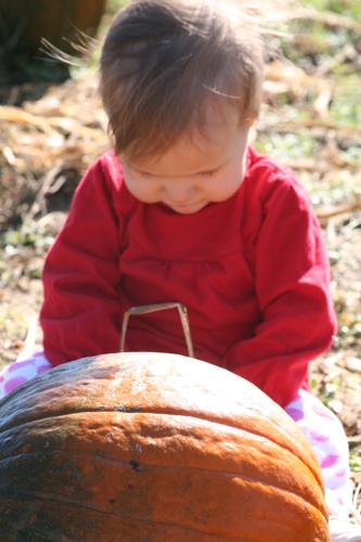pumpkinjulia
